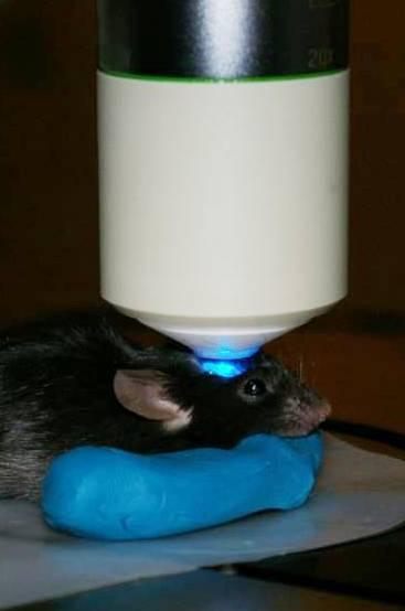 Optogenetics Leica Science Lab