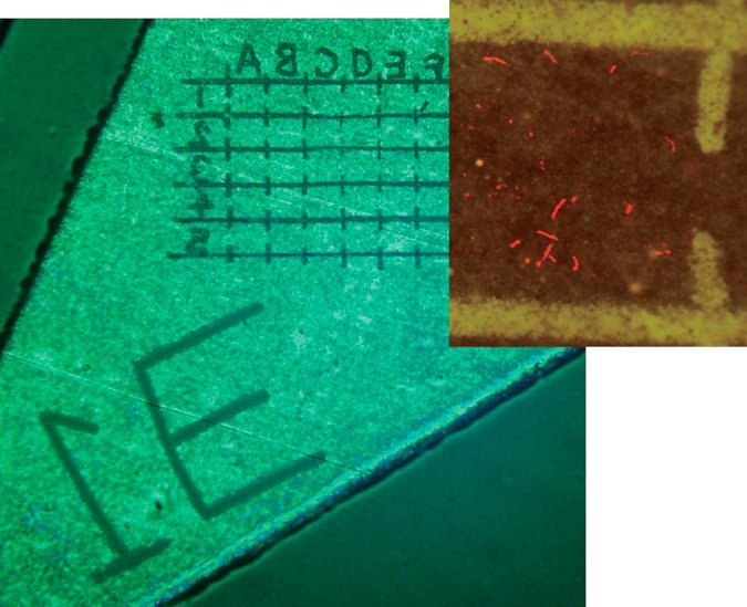 Laser Microdissection (LMD) and Fancy Applications